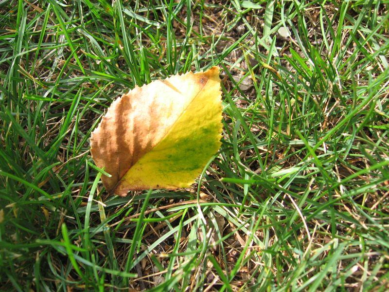 Fall 002