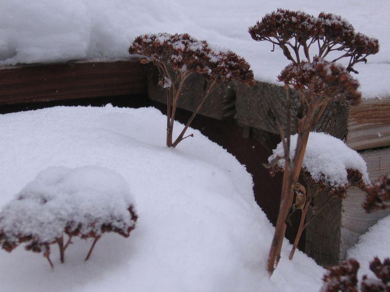 A snow 017