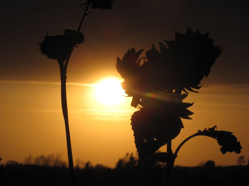 Gold sunset 4